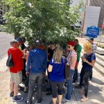 SUSI scholars huddled under a tree for shade